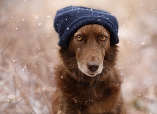 120815 photographer captures soulful portraits of dogs featured