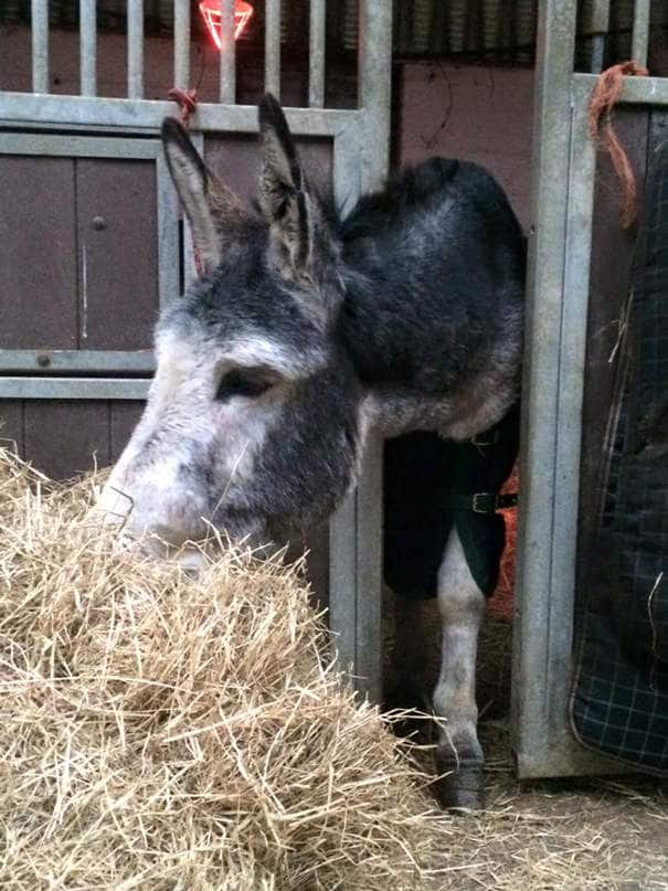 121215-donkey-smiled-after-being-rescued-10