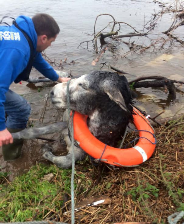 121215-donkey-smiled-after-being-rescued-4
