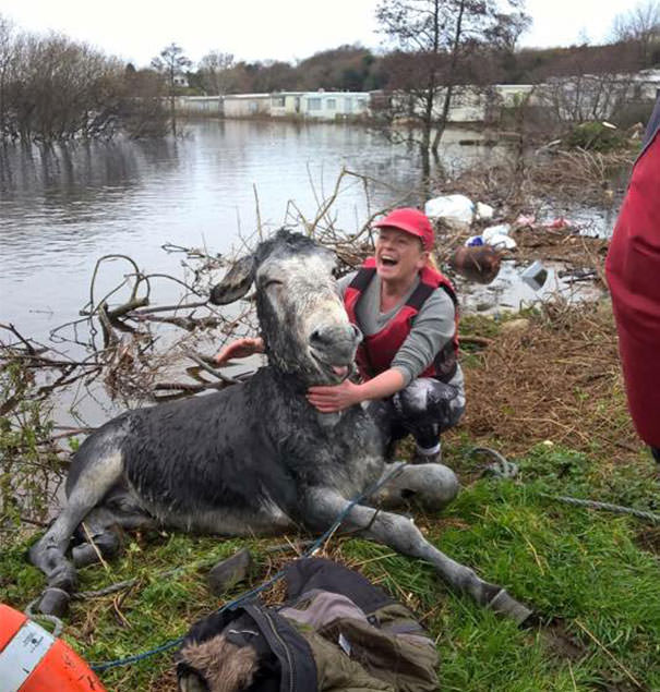 121215-donkey-smiled-after-being-rescued-5