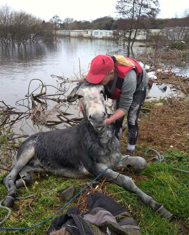 121215-donkey-smiled-after-being-rescued-6