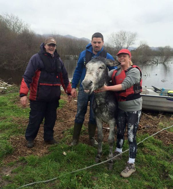 121215-donkey-smiled-after-being-rescued-7