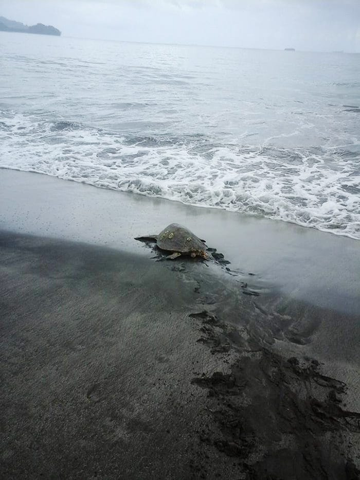 121215-man-buys-turtles-send-them-back-to-sea-3