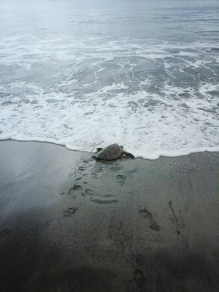 121215-man-buys-turtles-send-them-back-to-sea-4