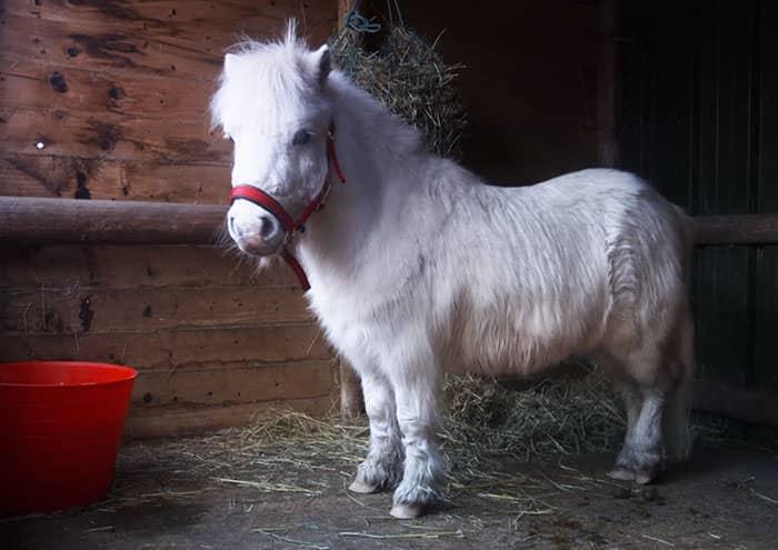 121615-foursie-onesie-for-pony-1