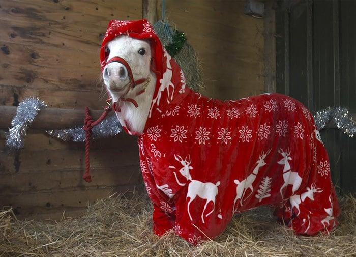 121615-foursie-onesie-for-pony-3