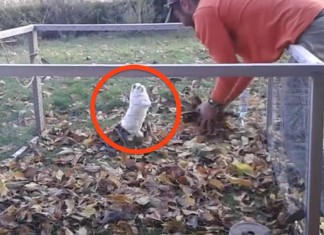 121915 rescue bunny plays with leaves