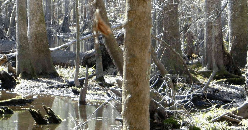 122115-spot-the-hiding-deer-2