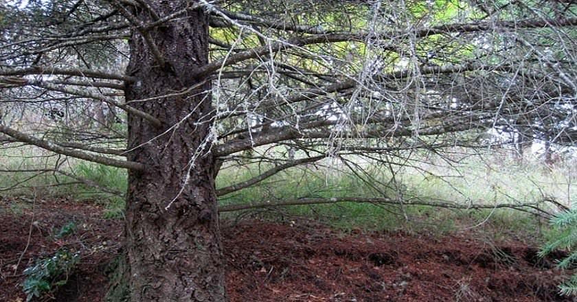 122115-spot-the-hiding-deer-3