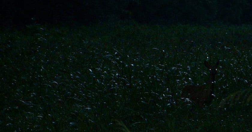 122115-spot-the-hiding-deer-4