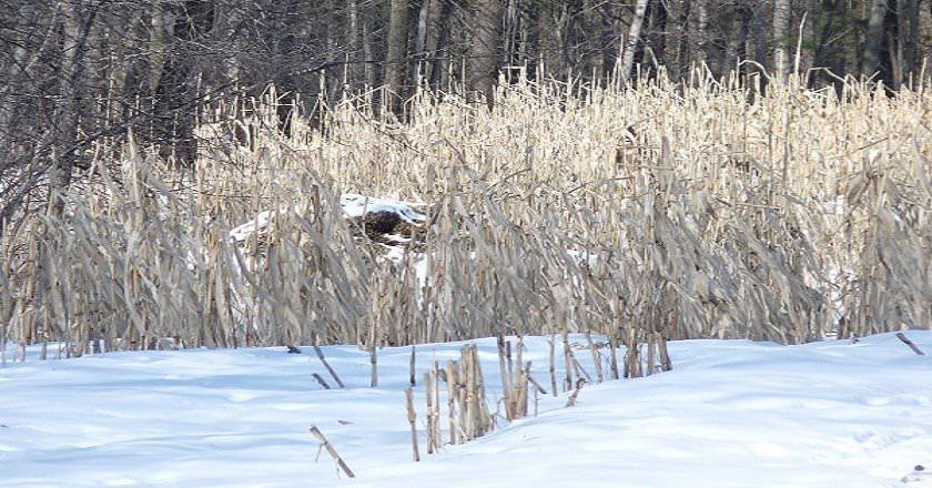122115-spot-the-hiding-deer-6