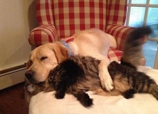 122415 greatest animal hugs 2015 featured