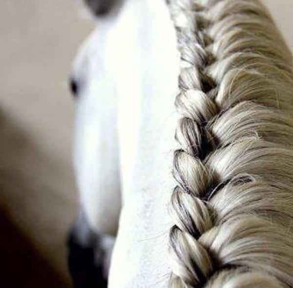 Instagram/horse_braids