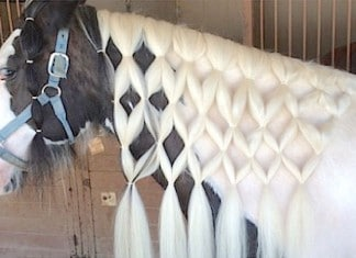 123115 horse mane braiding featured