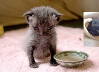 010616 woman found orphaned kitten featured