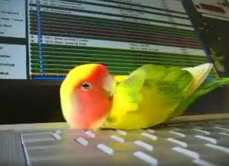 010916 bird sleeps on laptop