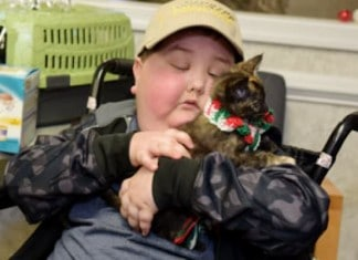 011316 shelter kitten made child dream come true featured