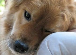011416 25 small pleasures dog people understands featured