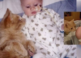 011816 cat helped baby brother healed featured 1