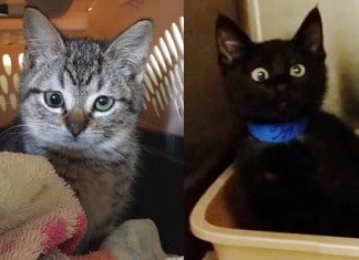 011916 10 kitties with cute googly eyes featured