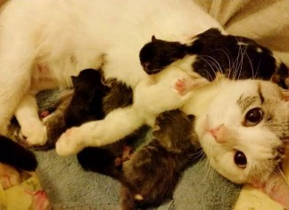 012216 family help stray cat little babies featured