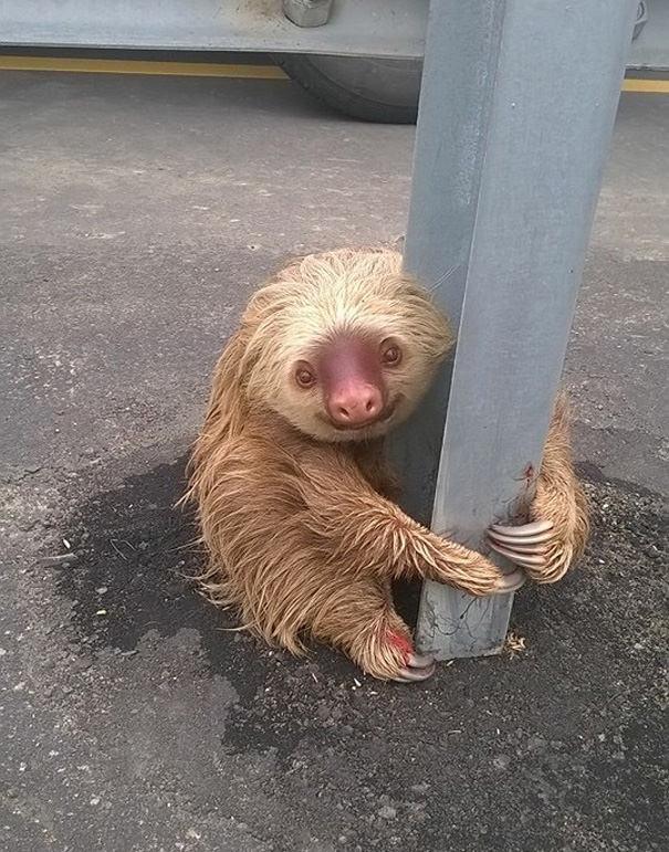 012716-Cop-Saves-Terrified-Sloth-Highway-2