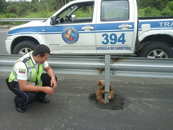 012716-Cop-Saves-Terrified-Sloth-Highway-3
