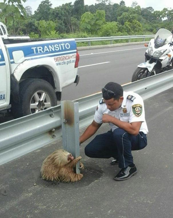 012716-Cop-Saves-Terrified-Sloth-Highway-4