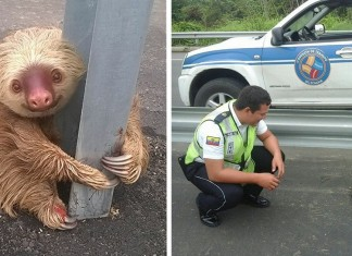 012716 cop saves terrified sloth highway featured