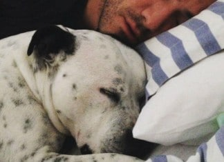 121915 how dog in bed lead to better sleep featured