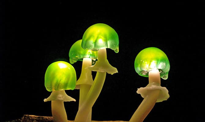 020216-MUSHROOMS-HOME-MAGICAL-FOREST-1