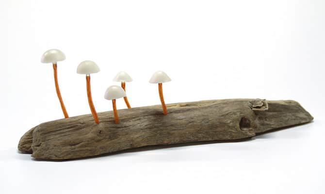 020216-MUSHROOMS-HOME-MAGICAL-FOREST-13