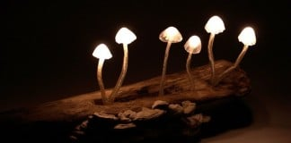 020216 mushrooms home magical forest featured