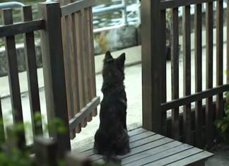 Chaque jour ce chien attend f