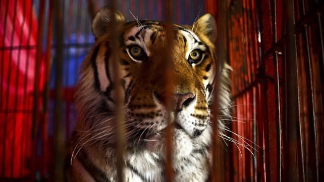 Les_cirques_avec_animaux_sauvages-01