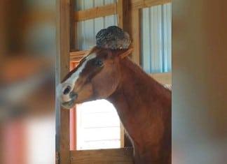Maman visite le cheval mais f