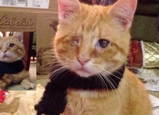Un chat aveugle sauvé du f