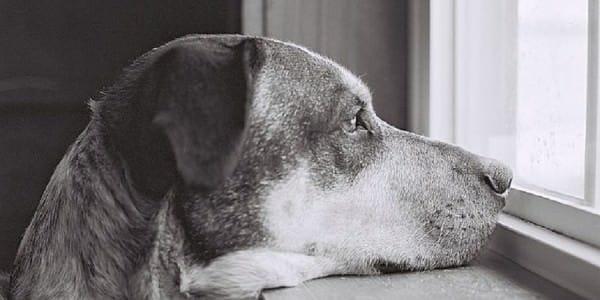 Voici_ce_que_votre_chien-f