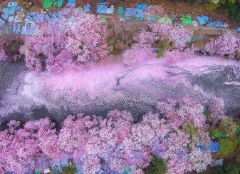 17 photos magiques des fleurs f