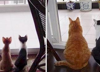 19 photos avant et après f