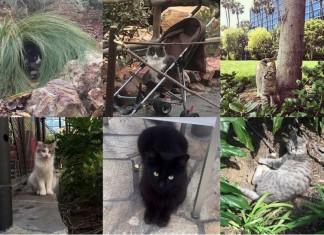 Les chats secrets de disneyland f