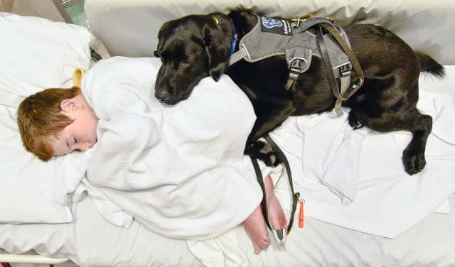 c/o Louise Goossens/Assistance Dogs New Zealand