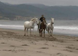 Chevaux a la plage fv2