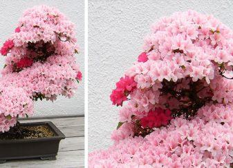 15 des plus beaux bonsaïs f