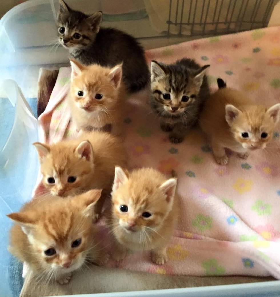 HERE KITTY KITTY RESCUE