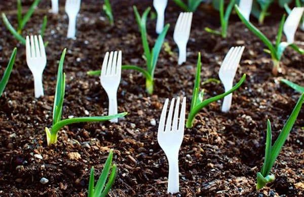Elle r cup re des fourchettes en plastique et les plante - Ou planter la rhubarbe dans le jardin ...