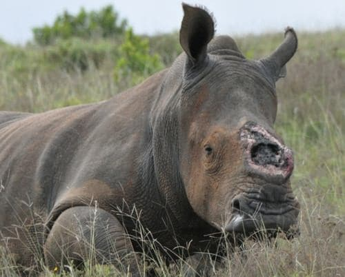 Fight for Rhinos