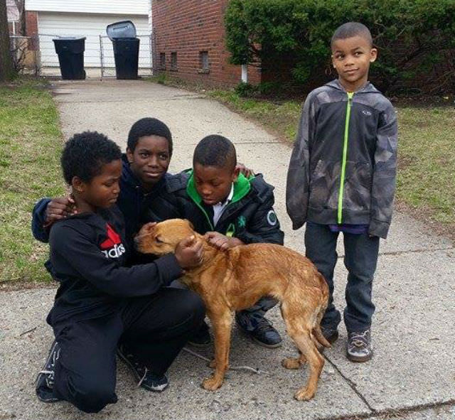 Detroit Pit Crew Dog Rescue/Facebook
