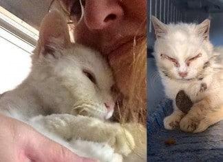 Une chatte sauvage sauvée par f