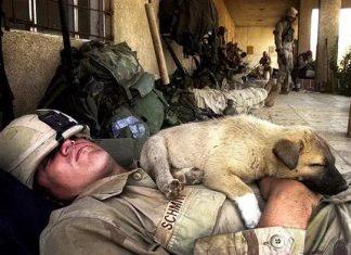 27 clichés touchants de soldats 14